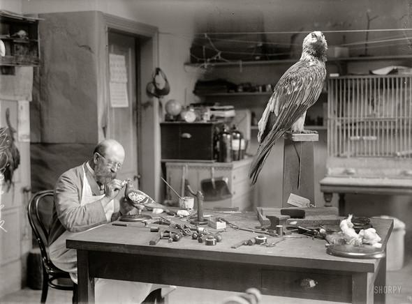 Фотографии с животными, начало прошлого века. Изображение № 9.