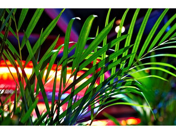 """Изображение 10. Дизайн Nina Donis для арт-проекта """"Бистро-16"""".. Изображение № 10."""