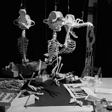 Мультяшные скелеты вшкафу ХюнгкуЛи. Изображение № 9.