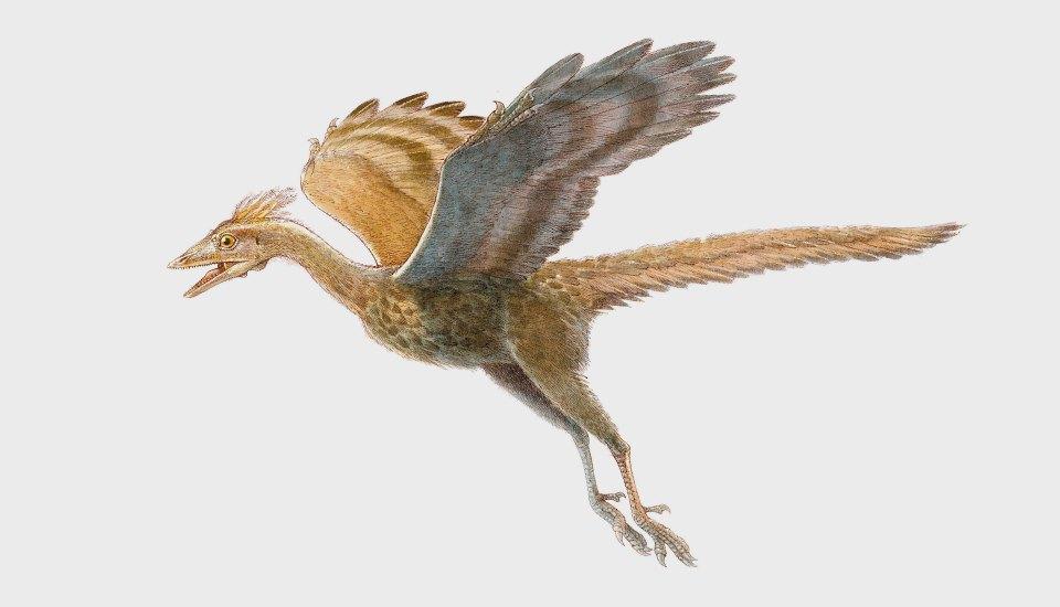 Как динозавры иединороги станут домашними животными. Изображение № 3.