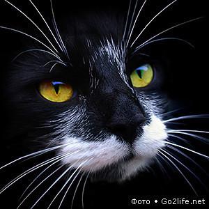 23 фото. Красивейшие кошки. Изображение № 1.