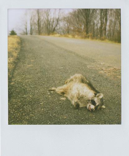 Animals Dead. Изображение № 10.