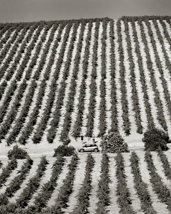 Изображение 8. Альберт Уотсон - шотландский фотограф, покоривший мир.. Изображение № 8.