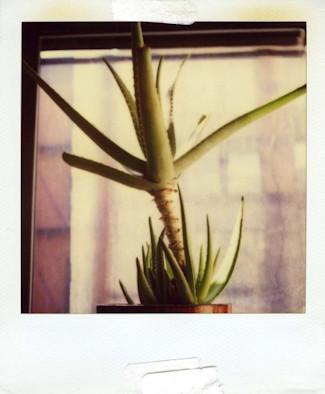 20 фотоальбомов со снимками «Полароид». Изображение №164.