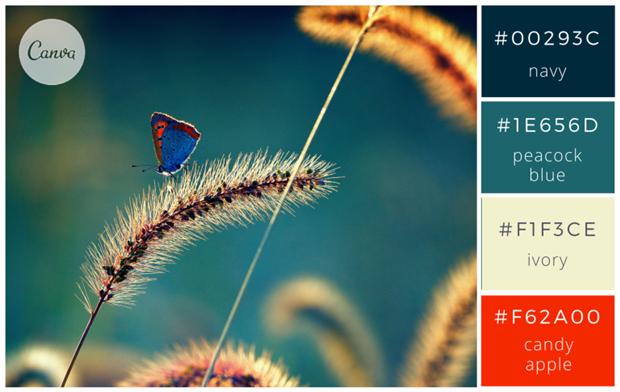 Сервис Canva предложил 100 удачных сочетаний цветов. Изображение № 25.