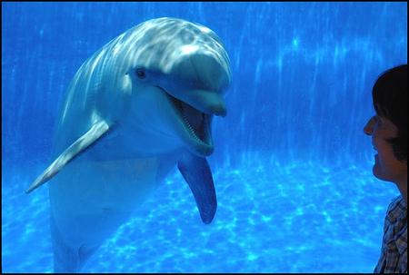Убийство дельфинов вДании. Изображение № 1.