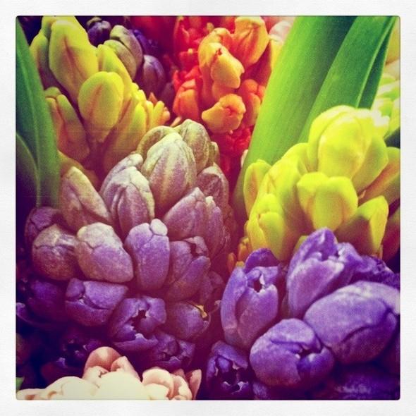 Гиацинты — одни из самых любимейших цветов, этот букет — подарок моей подруги Даши. Изображение № 15.