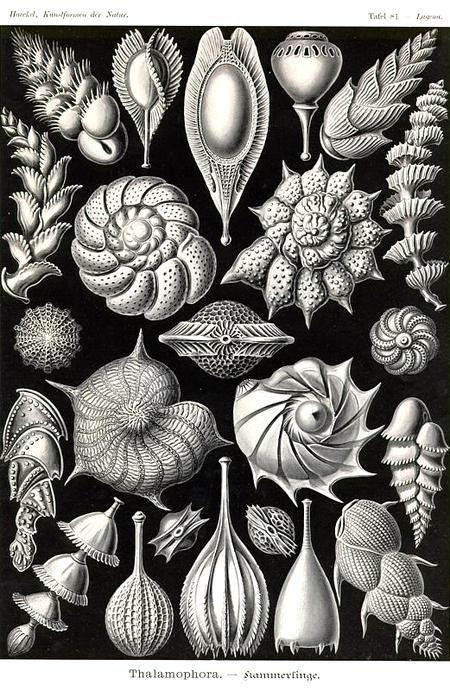 Причудливые формы природы. Изображение № 35.