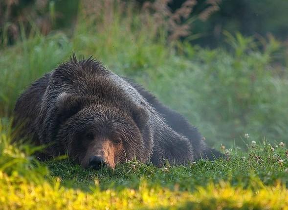 Фотоконкурс National Geographic 2010. Изображение № 7.