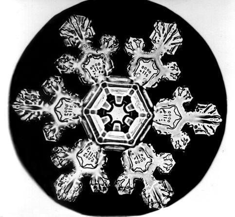 Уилсон Бентли иего снежинки. Изображение № 3.
