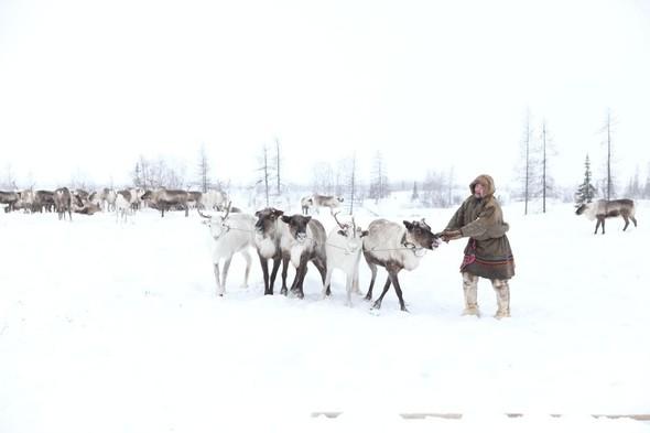 Путешествие на Север к ненцам. Изображение № 2.