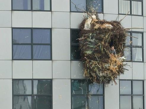 Креативные балконы. Увы, нев наших домах. Изображение № 8.
