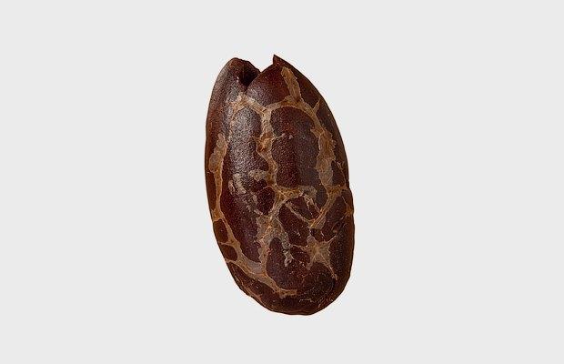 Как археологи откапывают древние бублики, сыр и шоколад . Изображение № 7.