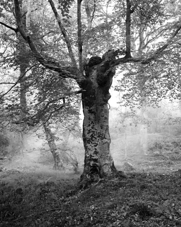 Изображение 40. Альберт Уотсон - шотландский фотограф, покоривший мир.. Изображение № 40.