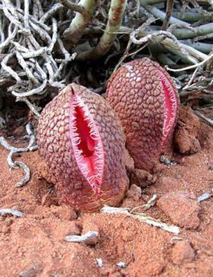 Необычные растения. Изображение № 5.