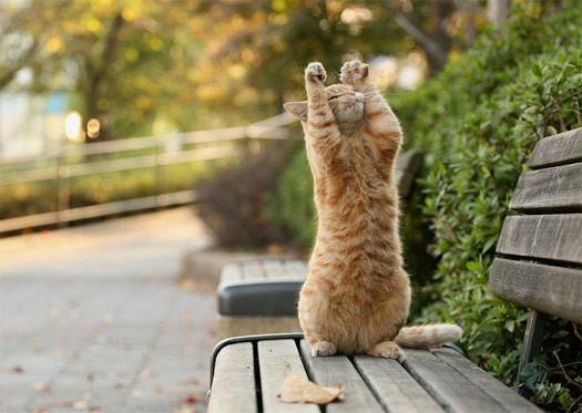 Кошки- лучшие целители. Изображение № 4.
