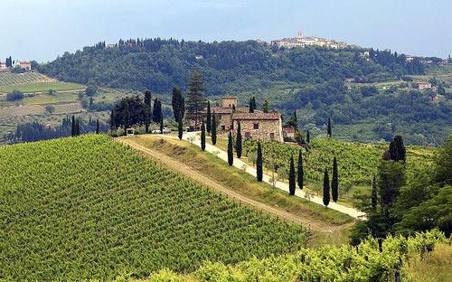 Мастер-класс по итальянским винам в «Коллекция Вин». Изображение № 2.