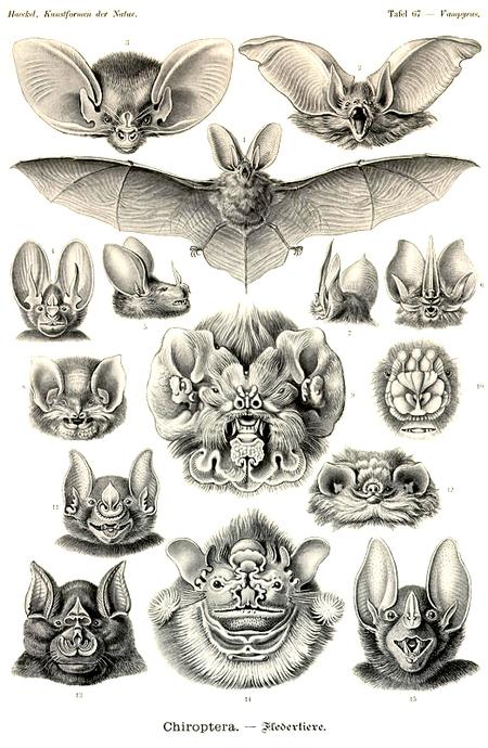 Причудливые формы природы. Изображение № 53.