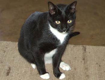 Кошка Мисси. Изображение № 1.