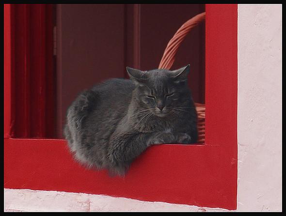 Cat. Window. Изображение № 22.