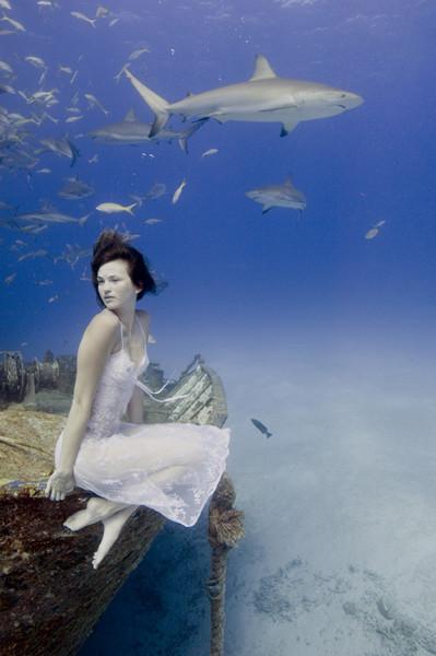 Todd Essick. Подводный мир. Изображение № 14.