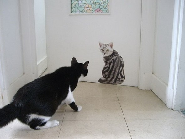 Котики в интерьере. Изображение № 8.