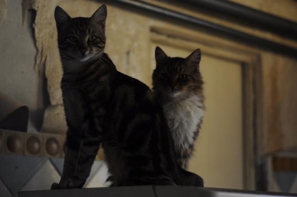 Кошки. . Изображение № 7.