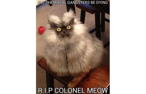 Скончался Полковник Мяу. Изображение № 1.