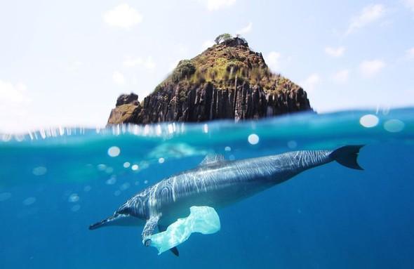 Фотоконкурс National Geographic 2010. Изображение № 11.