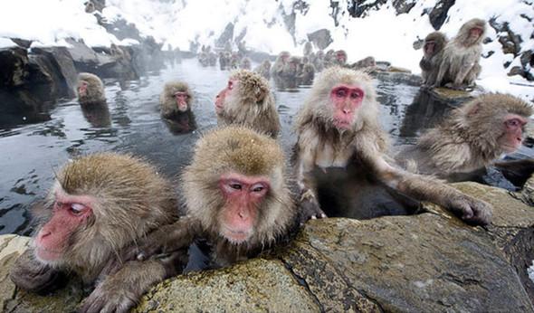 И даже обезьянам нужен отдых. Изображение № 15.