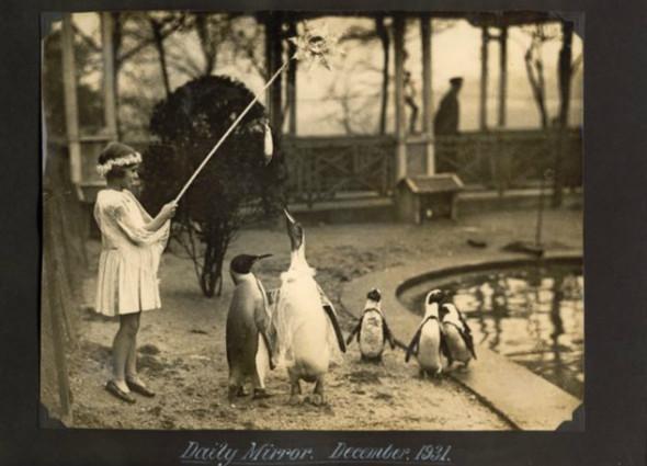 Лондонский Зоопарк 30-х. Изображение № 8.