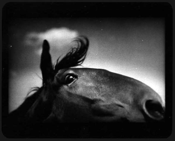 Джакомо Брунелли и«другие» животные. Изображение № 5.