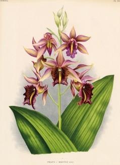 Глянцевые орхидеи: слухи, сплетни, комментарии. Изображение № 14.