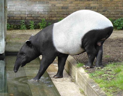 Самые необычные животные вмире. Изображение № 9.