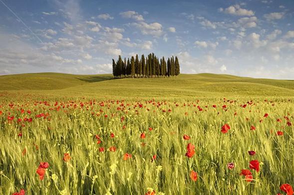 Очарованный солнцем Michele Berti. Изображение № 1.