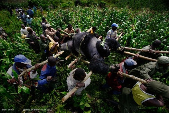 Папуа Новая Гвинея отБрента Стиртона. Изображение № 17.
