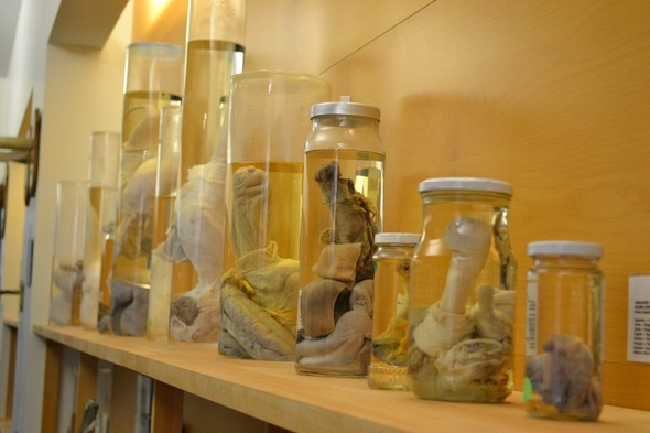 Фаллологический музей вернулся в Рейкьявик. Изображение № 13.