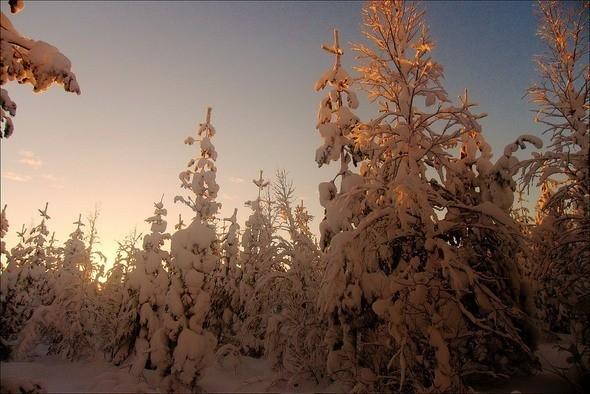 Изображение 28. Выходные в шведском лесу.. Изображение № 28.