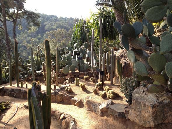 Ботанический сад. Изображение №57.
