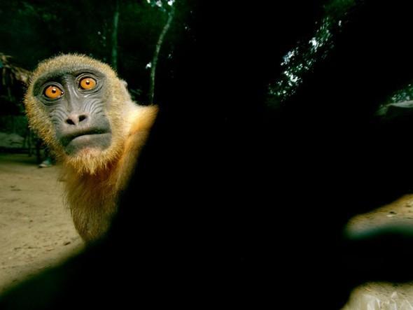 Лучшие снимки от National Geographic (золотой фонд). Изображение № 56.