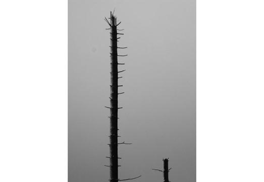 Фотографы, сделавшие проекты на гранты, — George Shaw и Lars Breuer. Изображение № 19.