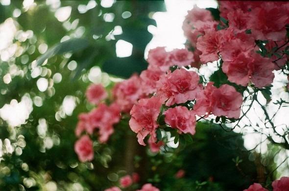 Прогулка по Ботаническому саду. Изображение № 3.