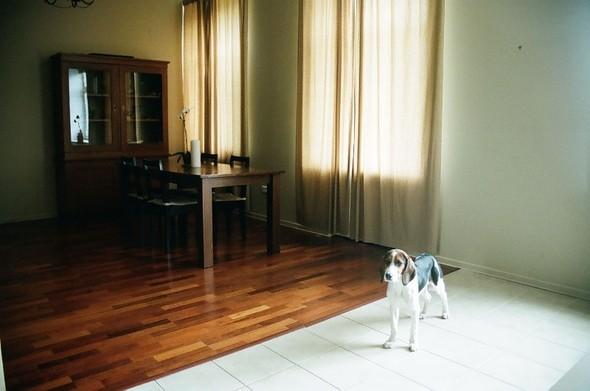 Квартира N2: Луиза иСаша. Изображение № 1.