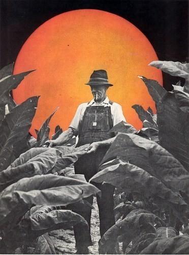 Изображение 2. Иллюстратор: Мэтт Шоу.. Изображение № 2.