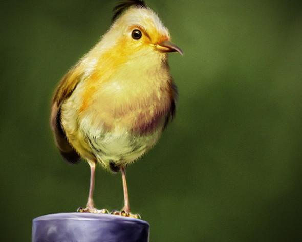 Реальные Angry Birds. Изображение № 3.