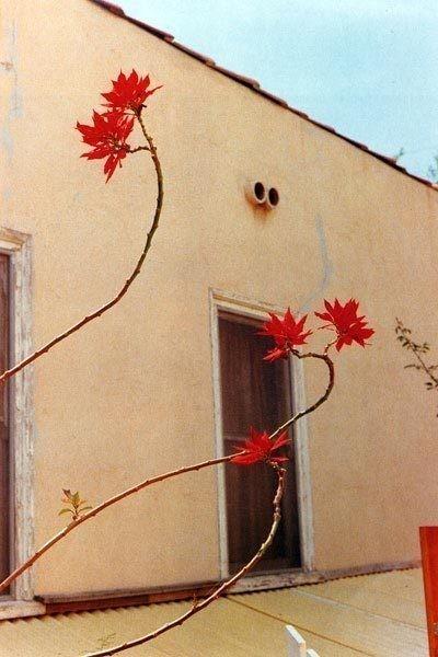 Изображение 25. Красочный мир Уильяма Эгглстона.. Изображение № 26.