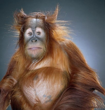 "Jill Greenberg ""Monkey portraits"". Изображение № 9."