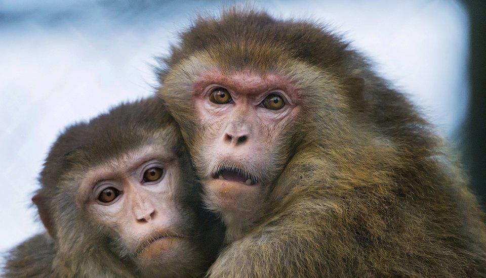 Животные, которые помогают науке. Изображение № 5.
