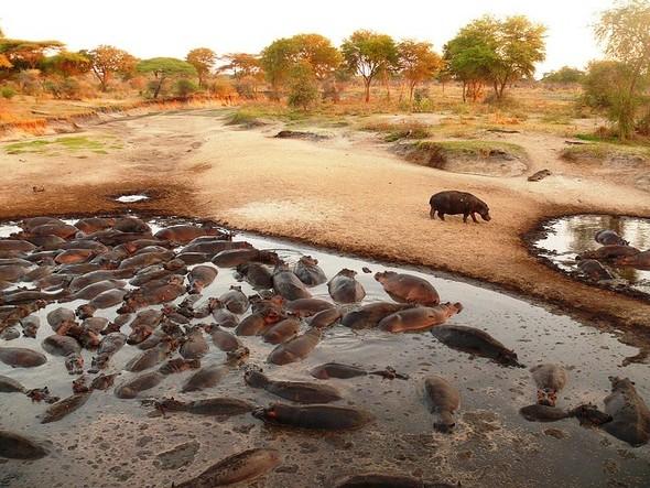 Бегемотово царство. Танзания. Изображение № 1.