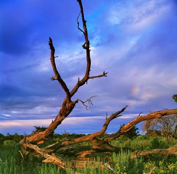 Ботсвана. Изображение № 17.